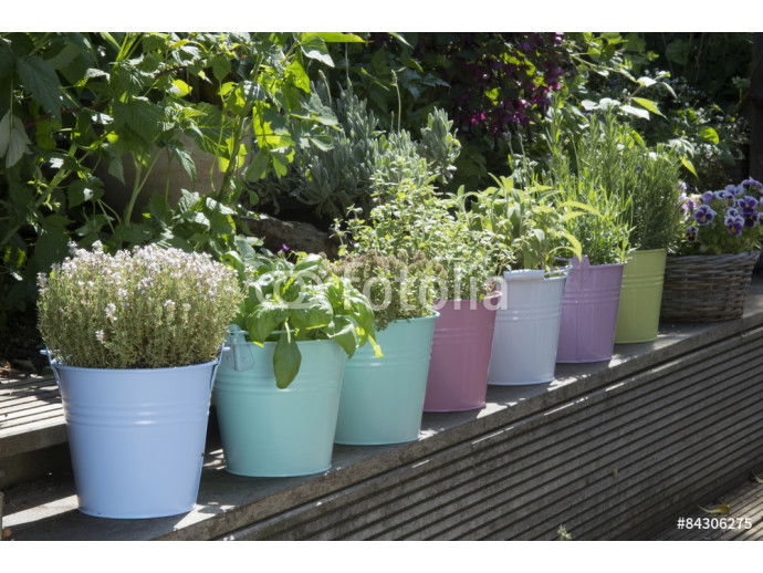 mix of herbs in colored buckets in garden 64238