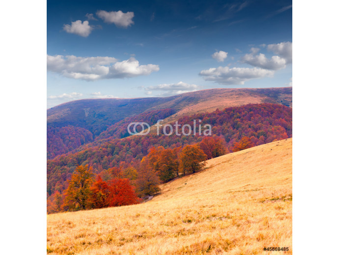 Colorful autumn landscape in the mountains 64238