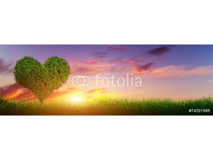 Heart shape tree on grass field at sunset. Love, panorama 64238