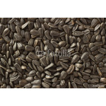 Macro background of sunflower seeds and wooden spoon 64238