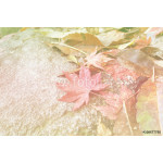 fall colored maple leaf on rock, soft focus 64238