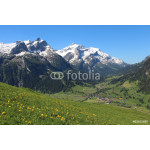 Snow capped mountains and green meadow 64238
