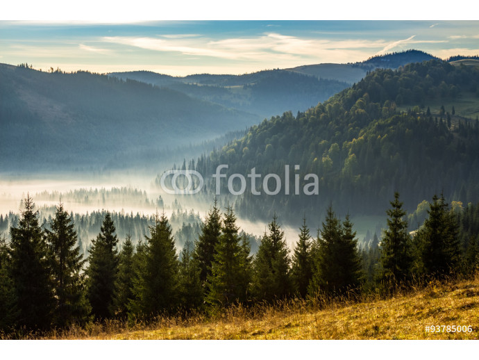 coniferous forest in foggy Romanian mountains at sunrise 64238