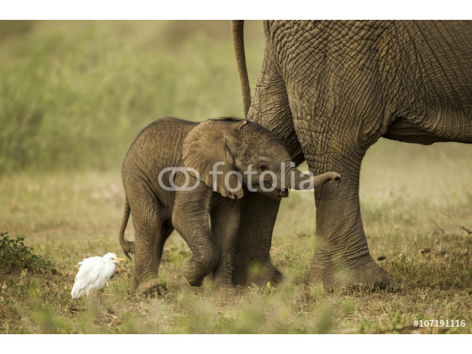 Baby elephant is playing a with bird 64238