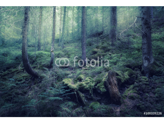 Fairy spring forest with green fog in the morning. Vintage Style 64238