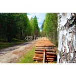 timber landscape with cut wood logs green trees and sandy road behind birch 64238