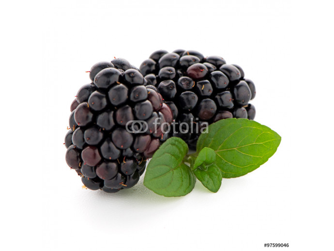 Blackberries with leaves 64238