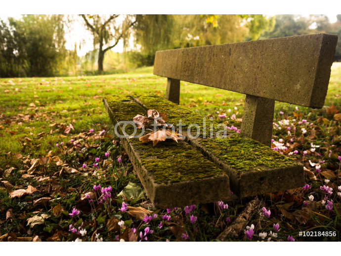 Fotomural decorativo Bench in the autumn park 64238