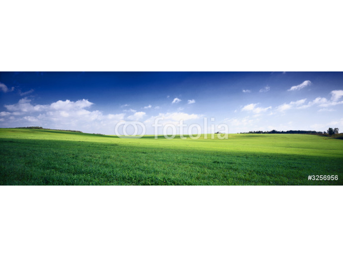 Wallpaper russia summer landscape - green fileds, the blue sky and white c 64238