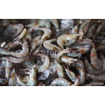 Fresh prawn put on ice in the seafood market 64238