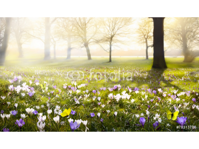 abstract sunny beautiful Spring background 64238