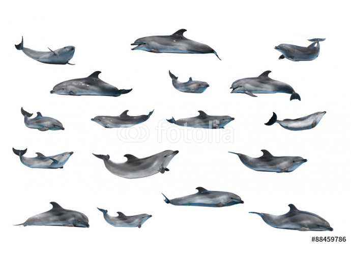 dolphins 64238