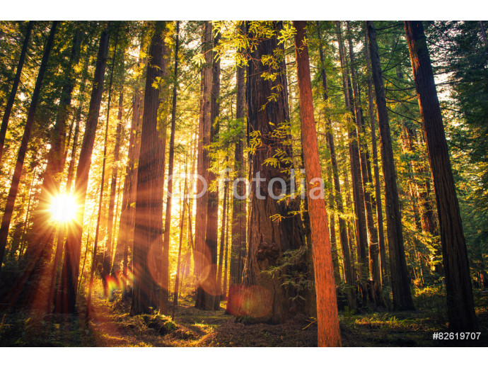 Fotomural decorativo Forest Trail Sunset 64238