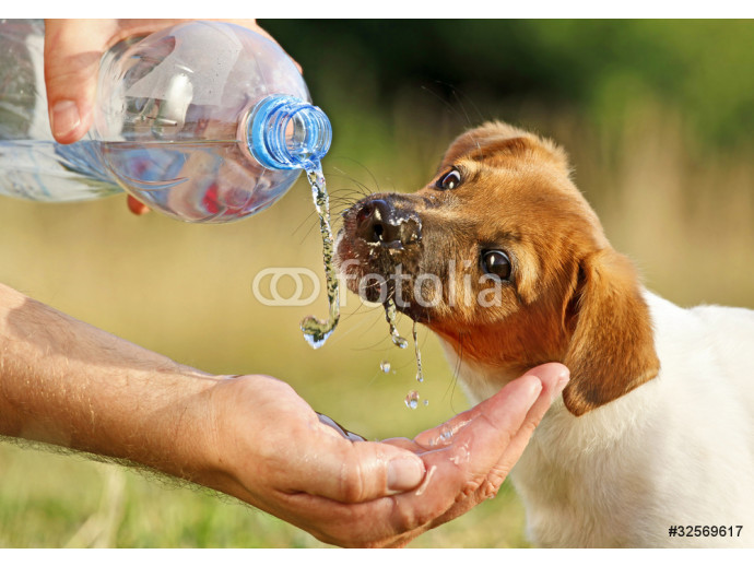 A puppy drinking water from a bottle 64238
