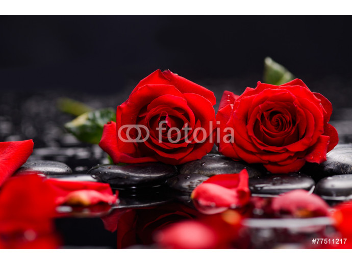 Still life with Red two rose and wet stones 64238