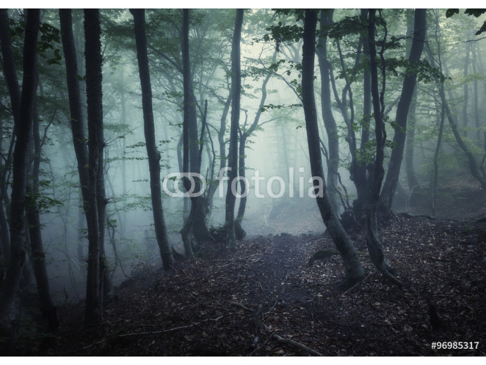 Autumn forest in fog. Beautiful natural landscape. 64238
