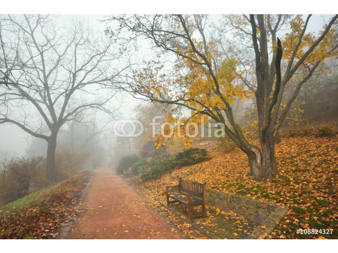 Bench and footpath in an autumn city forest park 64238