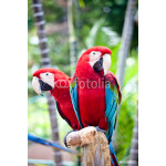 Beautiful colorful parrot 64238