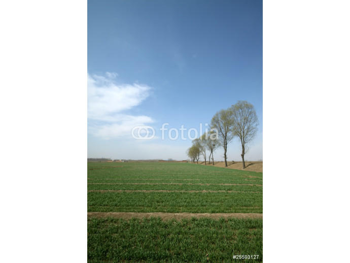trees and the wheat fields 64238