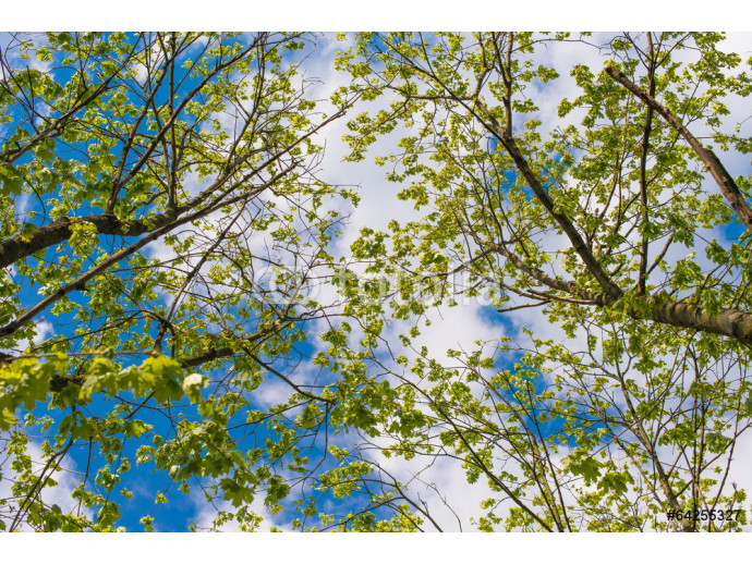spring landscape of trees against the sky 64238