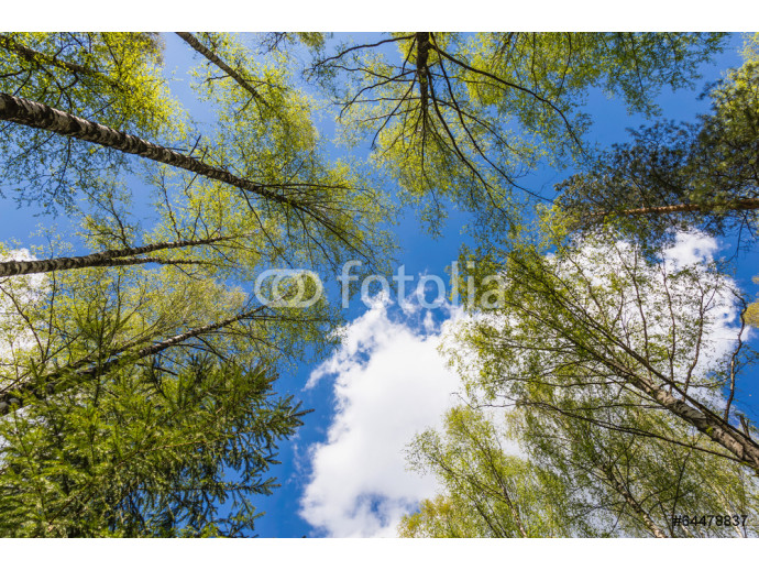 Looking up to the sky in forest 64238