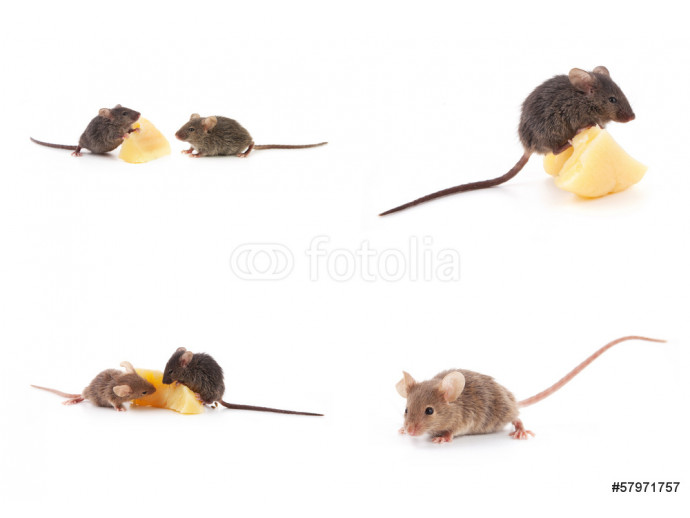Set of mice, Mouse and cheese on white 64238