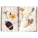 Open book with herbarium pages. Old dry up flowers. Vintage. 64238