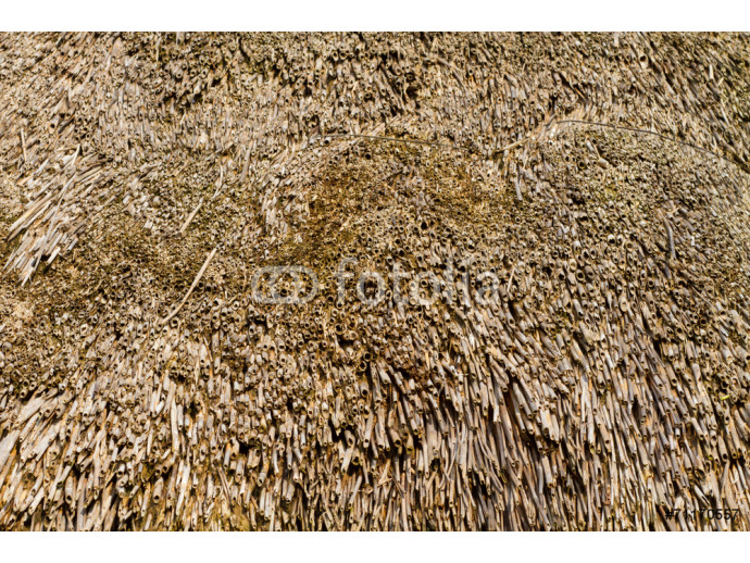 texture of straw roof 64238