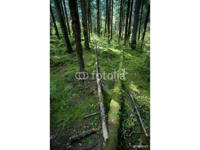 Tropical forests, moss on tree roots 64238