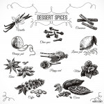 Vector hand drawn set with Dessert Spices. 64238