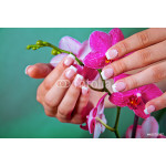 Woman's french manicure and pedicure 64238