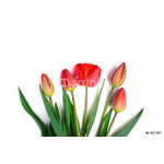bunch of red tulips bouquet isolated on white background 64238