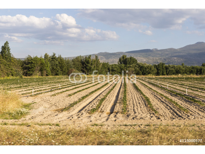 Fototapeta view of a landscape of fields cultivated captured from a car