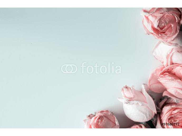Pastel roses in soft blue background 64238