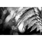 Black and White Fern Plant 64238