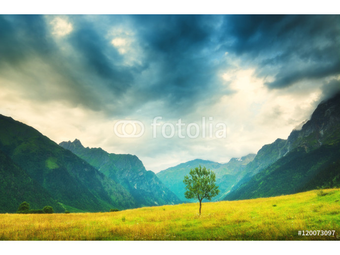 Lonely tree in a mountain valley 64238