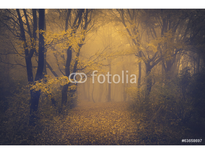 Mysterious foggy forest with a fairytale look 64238