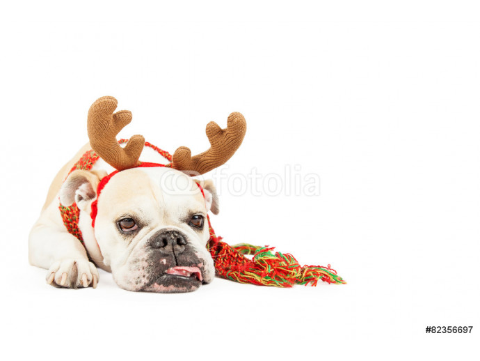 Tired Christmas Reindeer Dog With Copy Space 64238