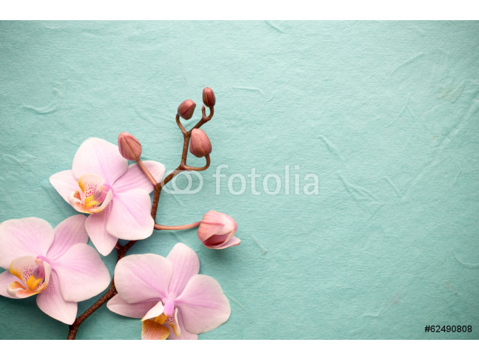 Orchid. 64238