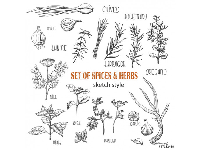 Wallpaper Set of Herbs and spices in sketch style 64238
