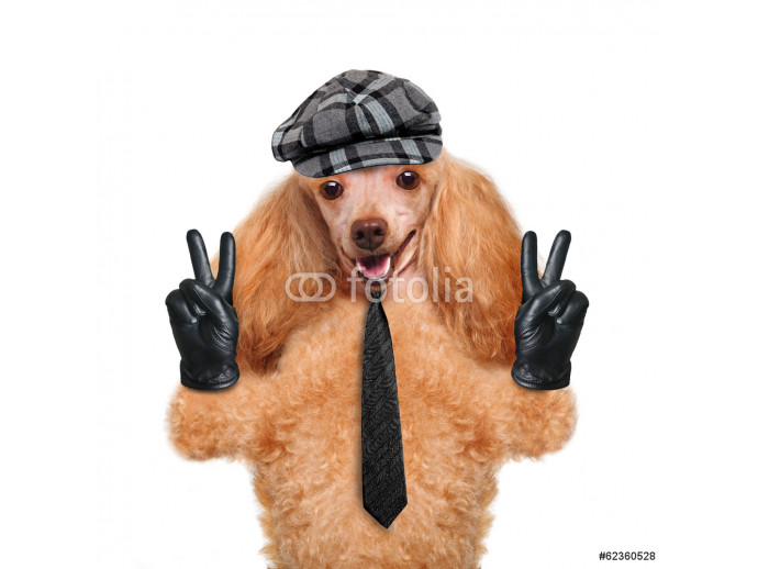 dog with peace fingers in black leather gloves 64238