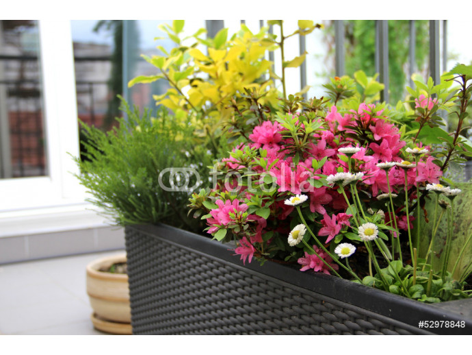 Modern terrace with a lot of flowers 64238