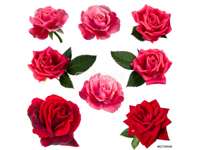 collage of eight red roses 64238