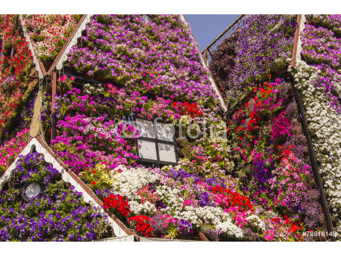 House of colorful flowers petunias in Miracle Garden 64238