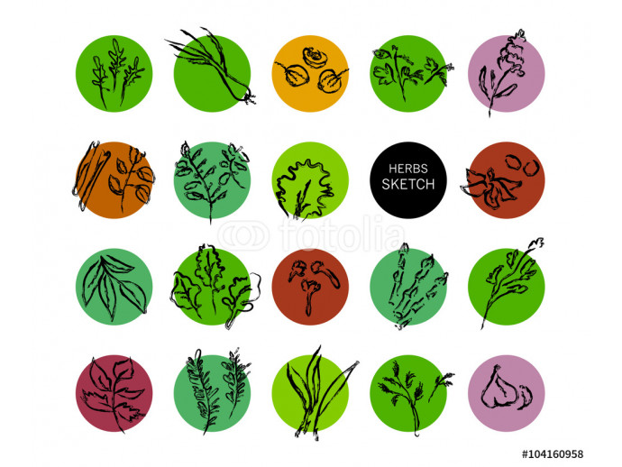 Hand drawn herbs collection 64238