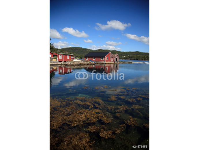 Beautifull Norway, bay  with boats and underwater foliage 64238