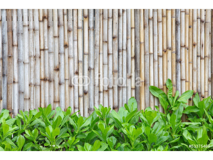 Photo wallpaper Bamboo fence 64238