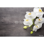 White orchid on the grey background. 64238