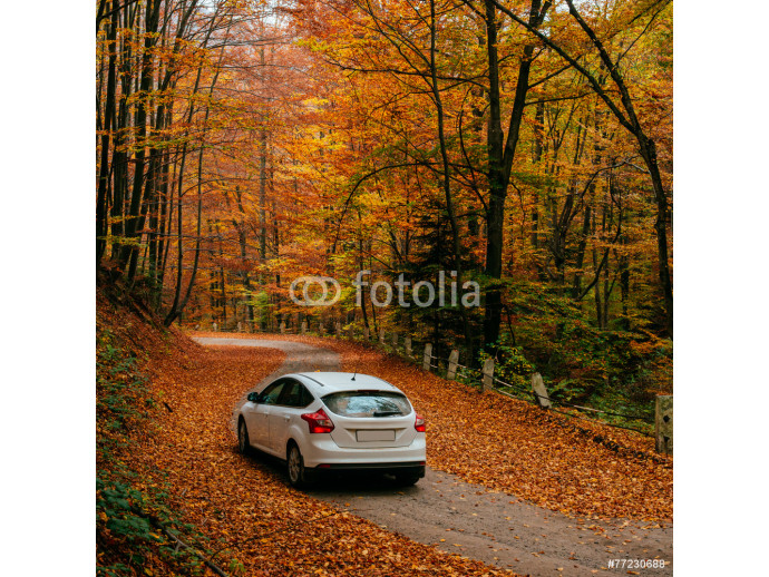 car on a forest path 64238