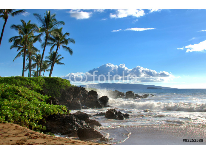 Tropical Hawaiian beach with palm trees, Maui, Hawaii, USA 64238